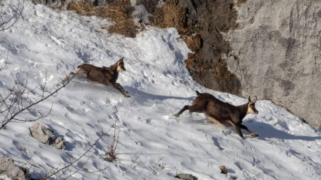 Beim Wintersport Rücksicht auf die Natur nehmen