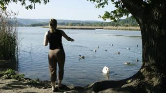 Erfolgreiche Aufklärung: Dank neuen Hinweistafeln bei der Rottenschwiler Brücke werden Wasservögel im Reusstal weniger gefüttert als früher.