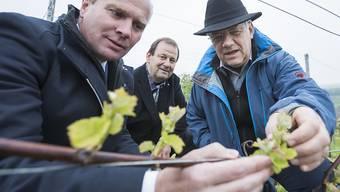 Die Frostperiode von Ende April bescherten den Obstbauern Ernteverluste von über 100 Millionen Franken. (Symbolbild)
