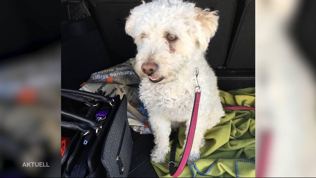 Hund von SVP-Politikerin frisst präparierten Köder