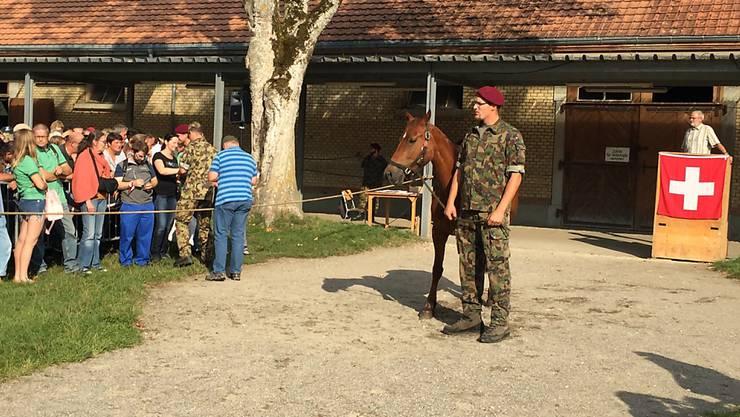 Eines der Pferde vom umstrittenen Hof in Hefenhofen im Kanton Thurgau wird beim Verkauf in Schönbühl bei Bern von einem Armeeangehörigen vorgeführt.