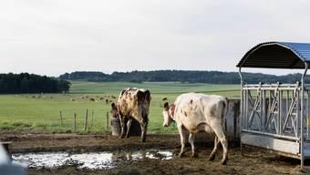 Viele Bauern wollen Bio-Milch produzieren - auch, weil der Preis für konventionelle Milch tief ist.