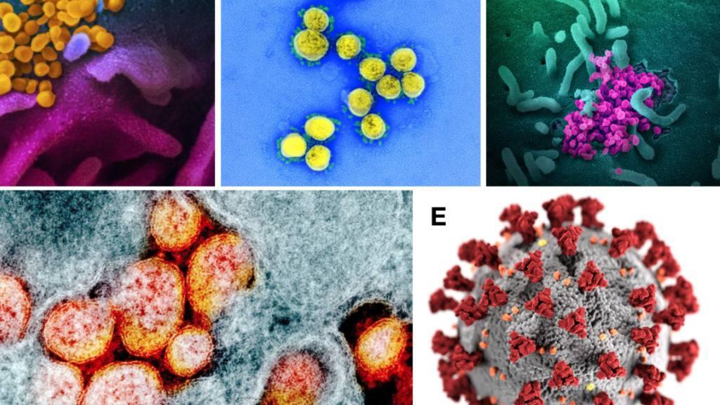 Verschiedene Darstellungen des Coronavirus Sars-CoV-2: Je «schöner» das Bild des Virus, umso harmloser wird der Erreger empfunden, wie aus einer Studie hervorgeht.