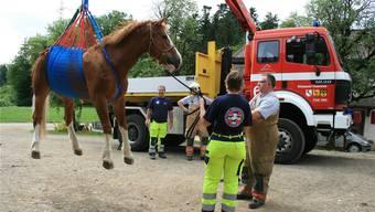 Ueli und Anita Windisch vom Grosstier-Rettungsdienst demonstrieren die fachgerechte Bergung eines Pferdes.