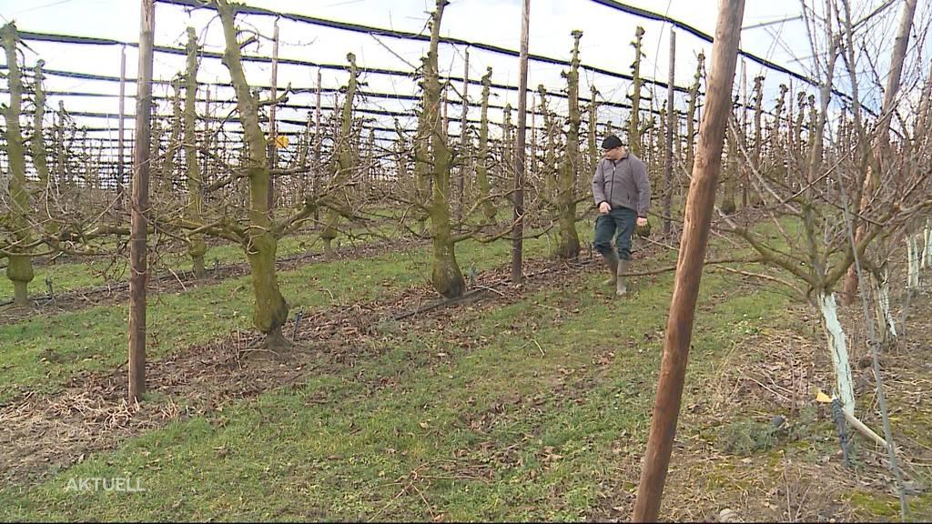 Bauern und Bieneninspektoren fürchten sich vor plötzlichem Kälteeinbruch