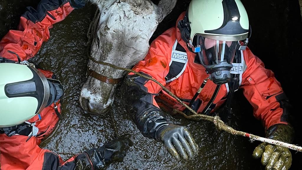 Feuerwehr rettet Kuh aus Güllenloch