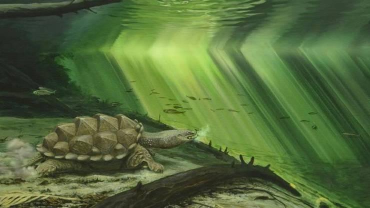 Künstlerische Darstellung der Urzeit-Schildkröte Platychelys oberndorferi. (Illustration)