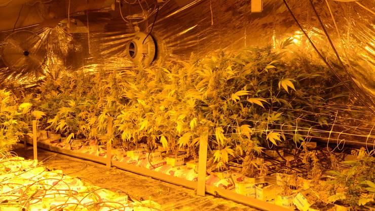 Die Baselbieter Polizei konnte eine Hanf-Indooranlage ausheben.