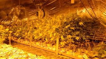 Baselbieter Polizei deckt Hanf-Indooranlage auf
