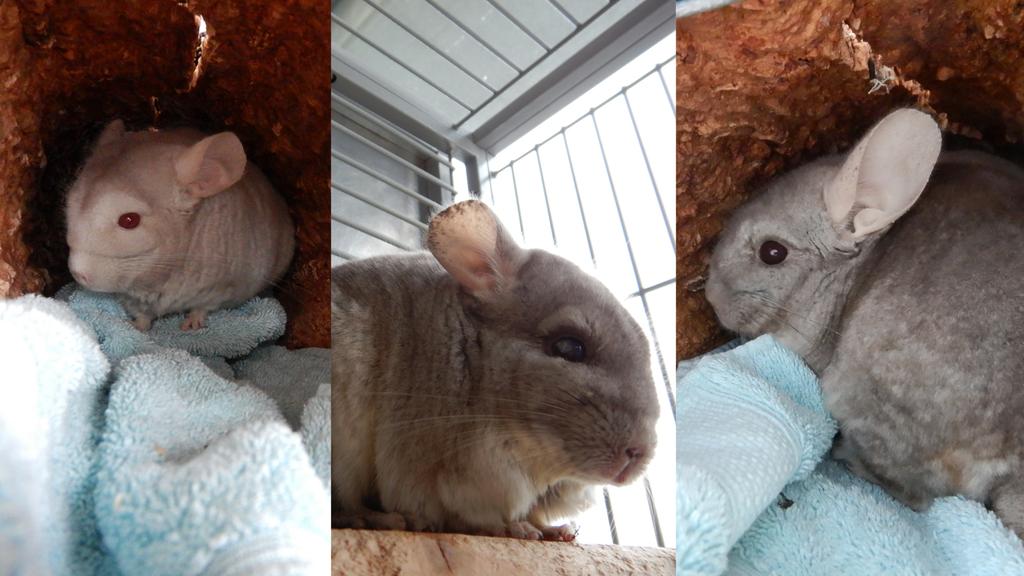 Coco, Muffin und Marshmellow