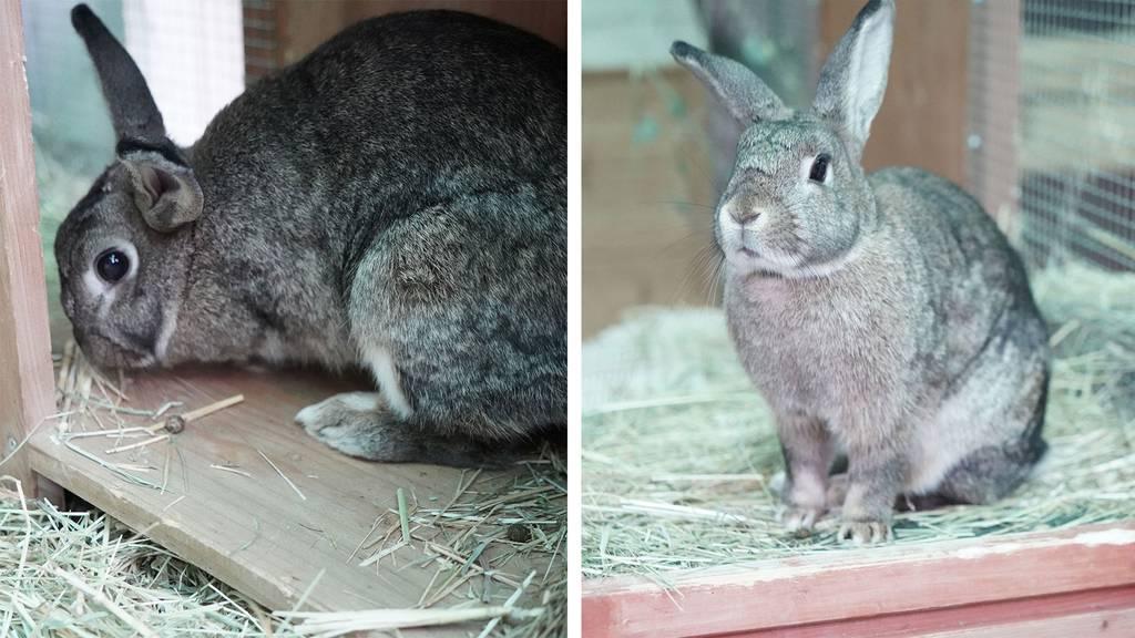 Weitere Kaninchen