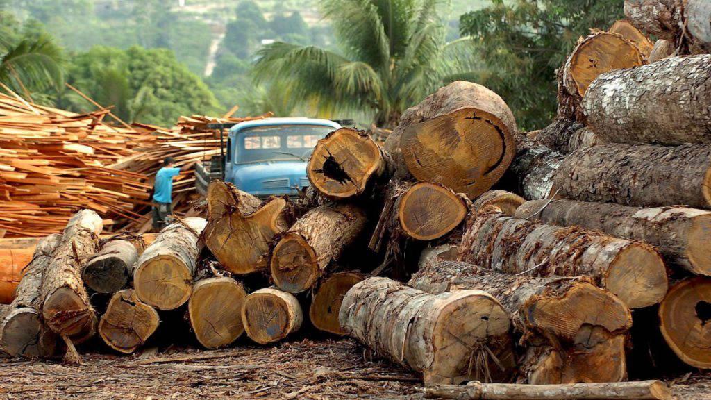 Abgeholzt: Die Zerstörung im Amazonas-Gebiet nimmt während der Corona-Krise deutlich zu. (Archivbild)