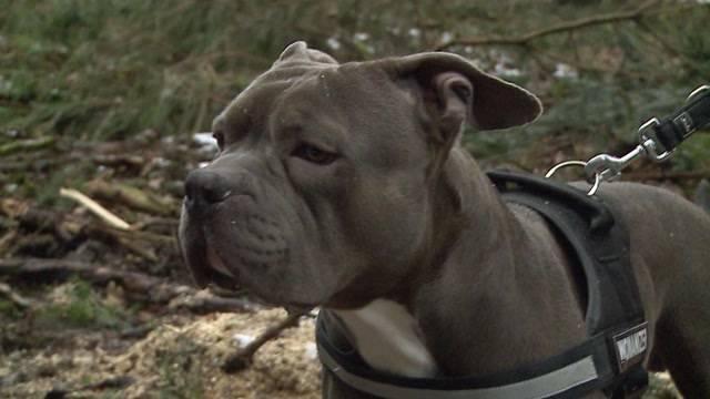 Geklauter Hund Mash abgemagert gefunden