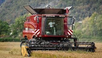 Schweizer Bauern sollen wettbewerbsfähiger werden, damit sie es mit der ausländischen Konkurrenz aufnehmen können. Laut Economiesuisse ist eine Lockerung des Grenzschutzes unausweichlich. (Symbolbild)