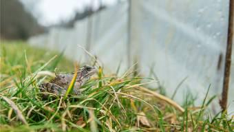 Weil er nicht darüberspringen kann, wird der Frosch dem Zaun entlang hüpfen – bis er in einen Kessel fällt.