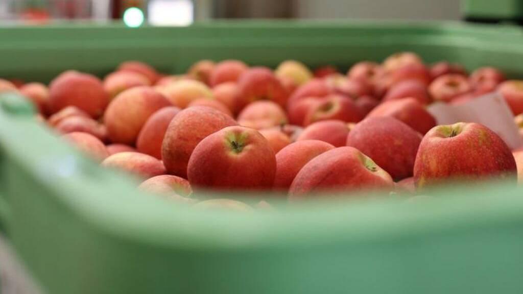 Kälte und Hagel lassen die Obsternte einbrechen