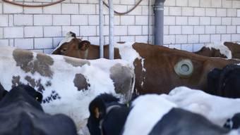 Die schweizweit zwölf Standorte von Agroscope sollen im freiburgischen Posieux zusammengelegt werden.