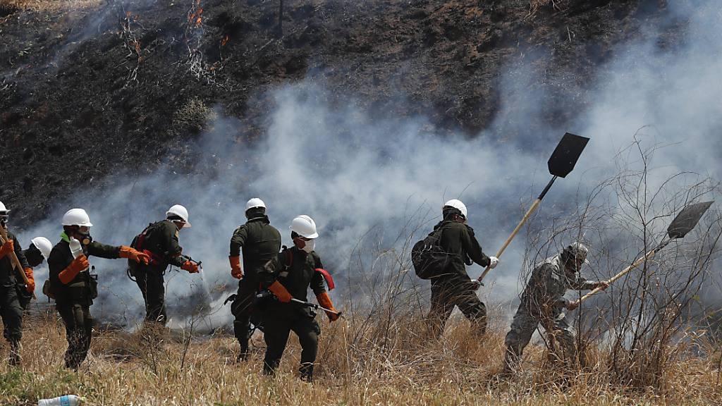 Waldbrände zerstören zwei Millionen Hektar Land in Bolivien