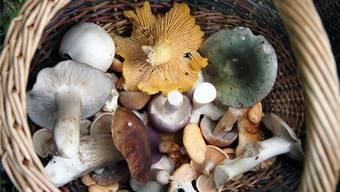 Ein Anblick, wie ihn Fricktaler Pilzsammler dieses Jahr noch nicht hatten: Ein volles Körbchen. Hans-Peter Neukom/AZ Archiv