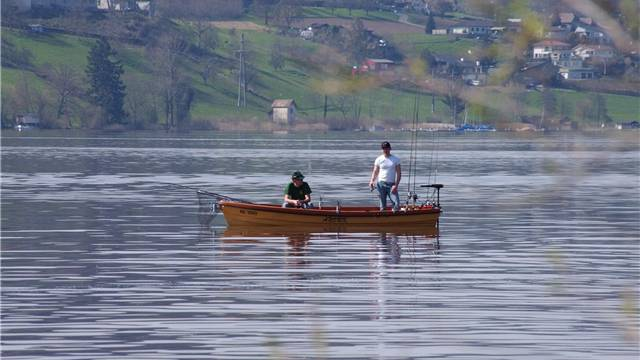 Bis sich die Fischbestände erholen, brauchen die Fischer am Hallwilersee noch viel Geduld. HO