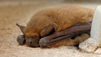 Die kleinen Tiere erkennen ihre Pflegemama am Geruch und akzeptieren keine andere. (Archiv)