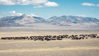 Die Region Altai in der Mongolei könnte zur Wüste werden.