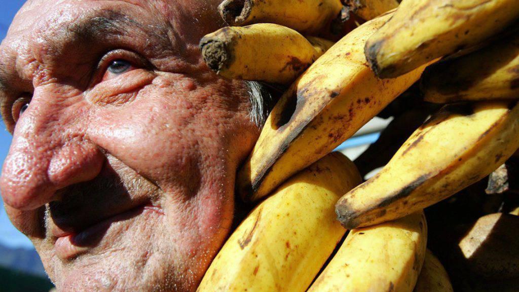 Die beliebteste Bananen-Sorte ist vom Aussterben bedroht. Eine Alternative ist noch nicht in Sicht. (Symbol)