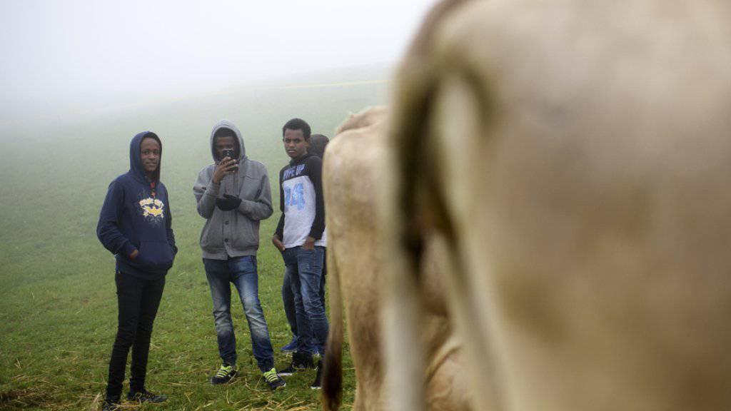 Asylbewerber aus Eritrea an einer Viehschau in Trogen: Die FDP-Motion wollte den Bundesrat dazu verpflichten, Verhandlungen mit Asmara aufzunehmen - mit dem Ziel ein Rückübernahmeabkommen abzuschliessen. (Themenbild)