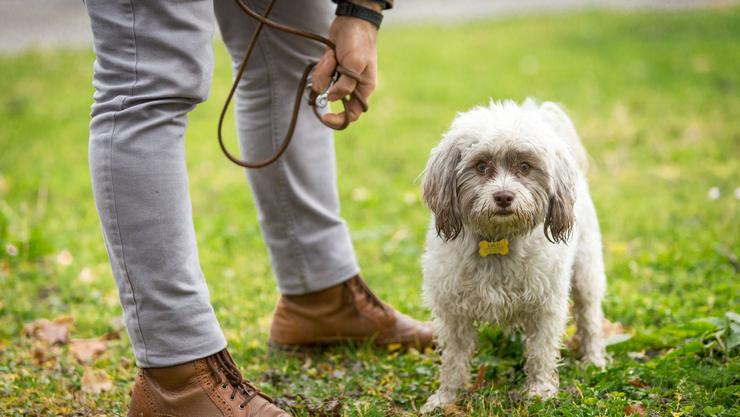 Dass das Verordnungsveto zu Unsicherheiten führen kann, zeigt beispielhaft das Solothurner Hickhack um die Leinenpflicht bei Hunden.