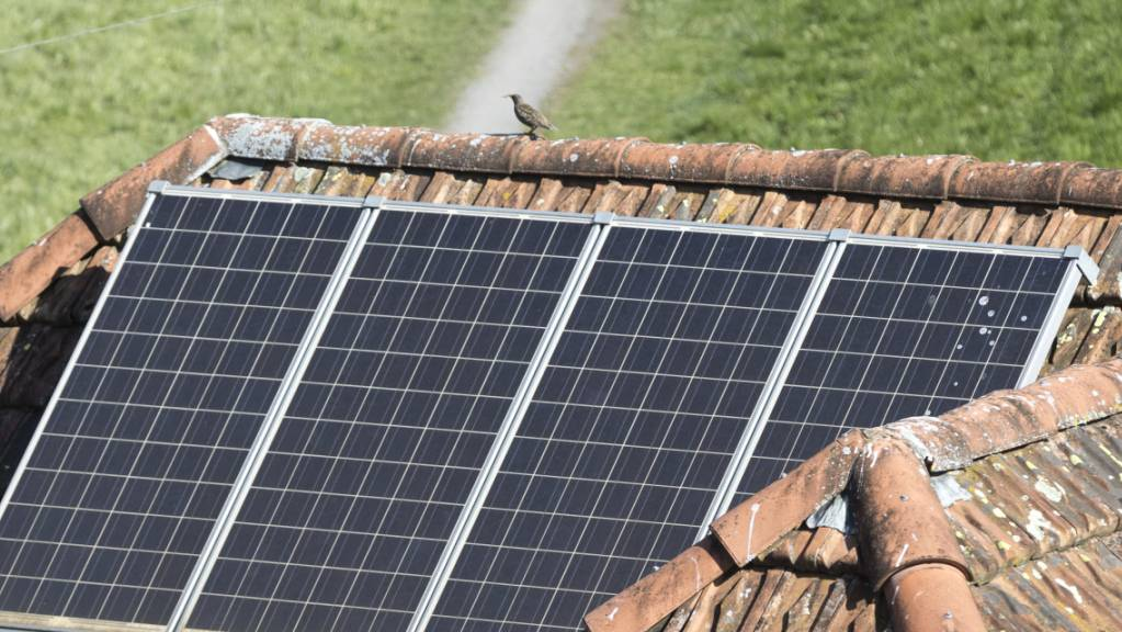 Für den Solarstrom aus Photovoltaik-Anlagen gibt es für die Besitzerinnen und Besitzer Einspeisevergütungen. Die Beträge sind allerdings je nach Energieversorger unterschiedlich. (Symbolbild)