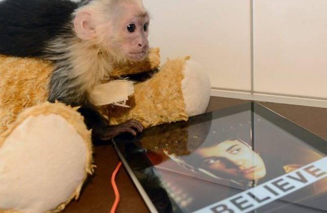 Biebers Affe scheint sich nach seinem Herrchen zu sehnen - doch das macht sich rar