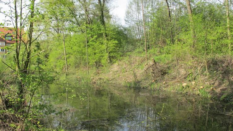 Biotop Lochwasser