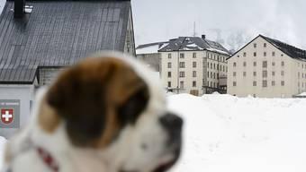 Die Bernhardiner der Stiftung Barry werden ab diesem Sommer eine bessere Unterbringung auf dem Grossen Sankt Bernhard geniessen. (Archiv)
