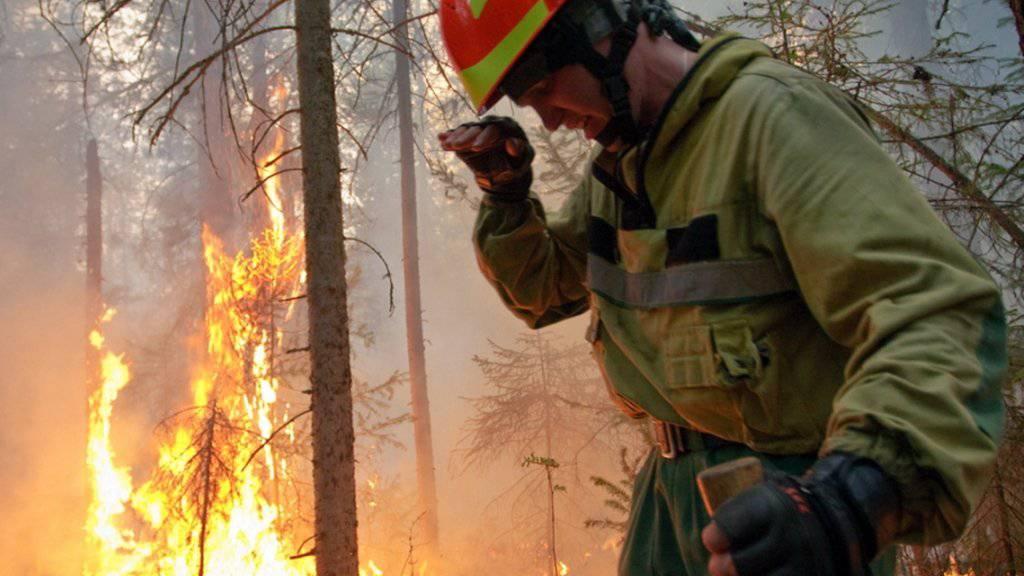 Waldbrände in Russland wüten derzeit laut Angaben von Greenpeace auf einer Fläche grösser als die Schweiz.
