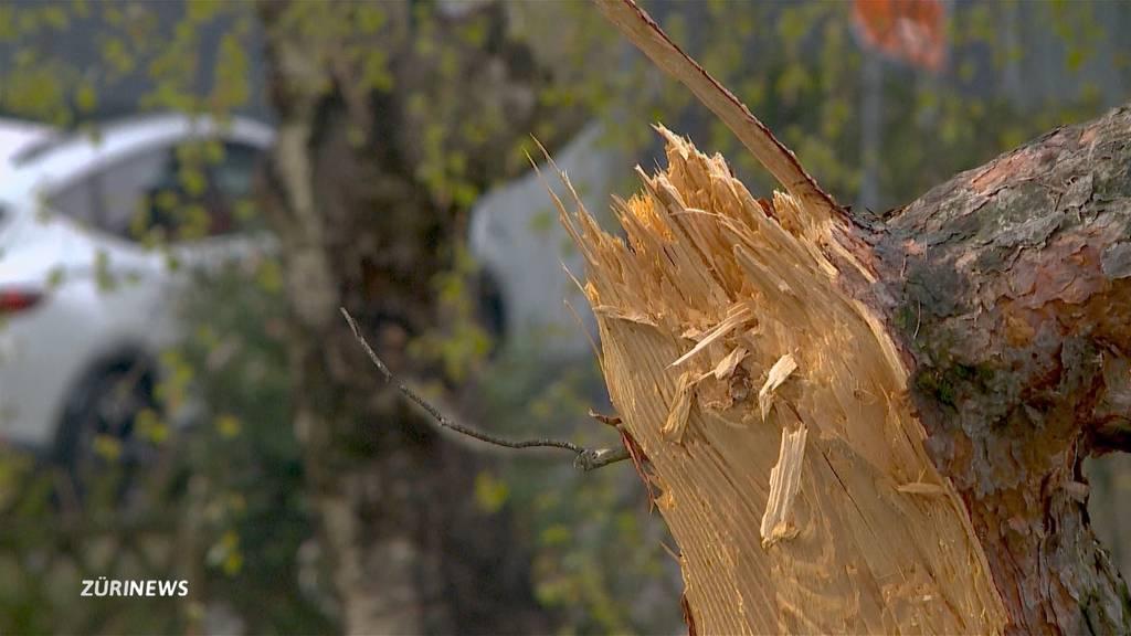 Rekord-Schneefall hinterlässt beschädigte Bäume