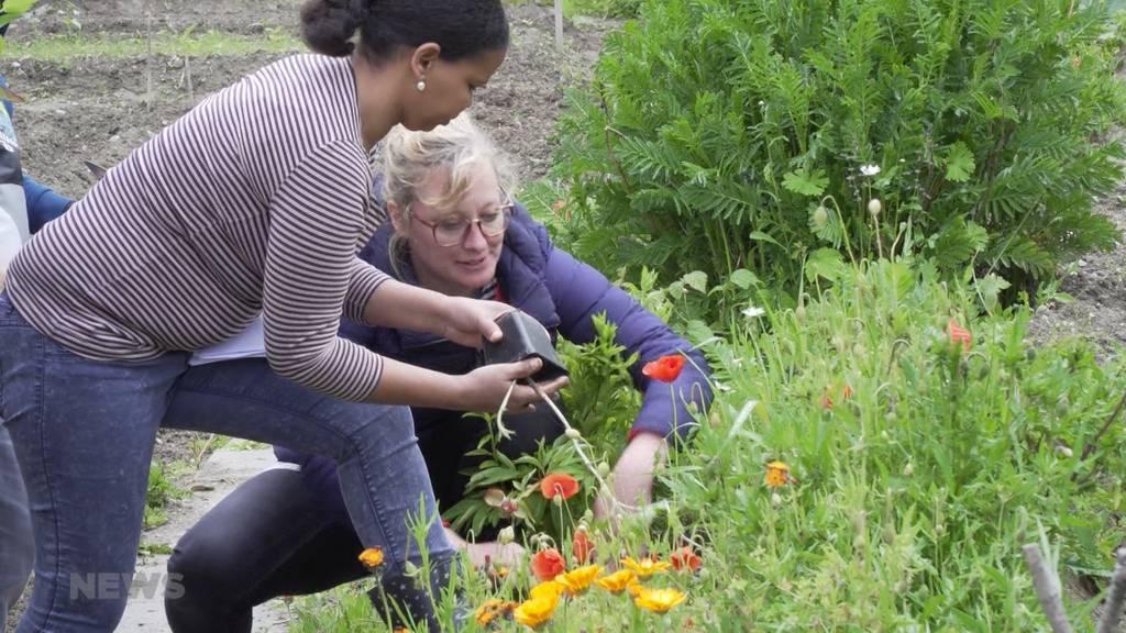 Tredes Gartenprojekt soll Flüchtlinge dem Schweizer Alltag näher bringen