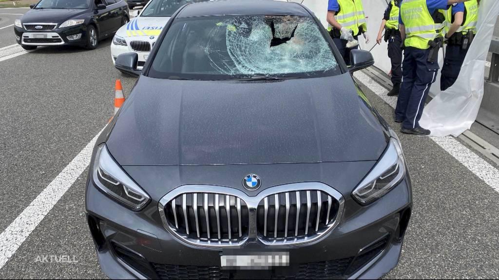 Nach tragischem Unfall auf der A1: Wie sollte man bei Wildtieren auf der Strasse reagieren?