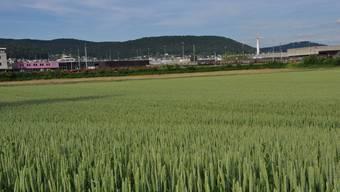 Wo heute Korn wächst, soll dereinst gewohnt und gearbeitet werden.jpg
