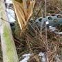 Vandalen zerstörten drei junge Bäume in Dottikon.