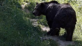 Ein Braunbär in einem Zoo (Symbolbild)