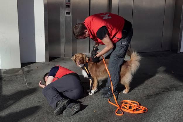 Die Hunde werden trainiert, um vermisste Menschen zu finden. Auch Täter werden mit der Nase aufgespührt.