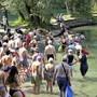 Am Rheinschwimmen nehmen jeweils Hunderte Schwimmer teil. zvg