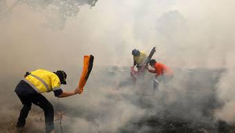 Bewohner im Buschbrandgebiet in Australien versuchen in Handarbeit eine Ausbreitung des Feuers zu verhindern.