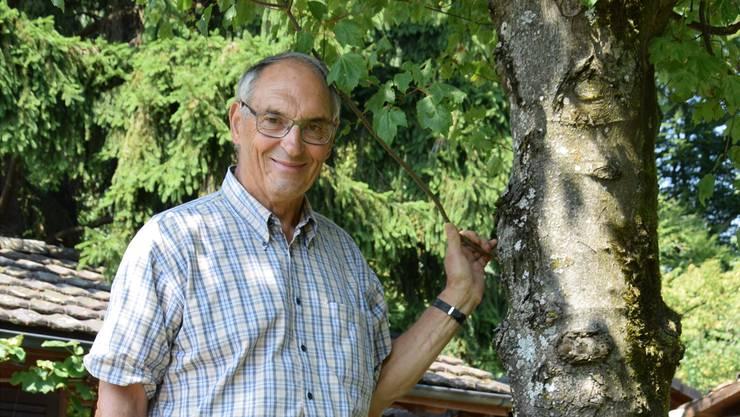 Vor 39 Jahren kehrte Urs von Wartburg mit einem kleinen Pflänzchen von den Olympischen Spielen in Montreal zurück – heute gedeiht der Ahorn in seinem Garten prächtig.