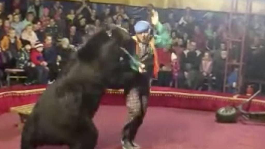 Bär fällt über Dompteur in russischem Zirkus her