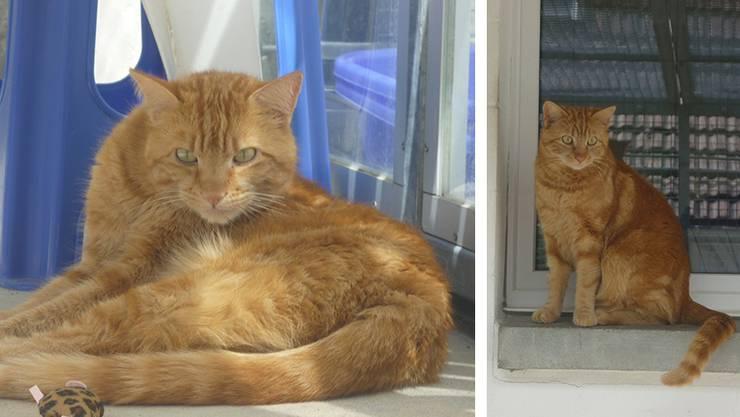Max und Leo leben momentan im Tierdörfli in Wangen bei Olten. Dort warten sie auf einen neuen Besitzer.