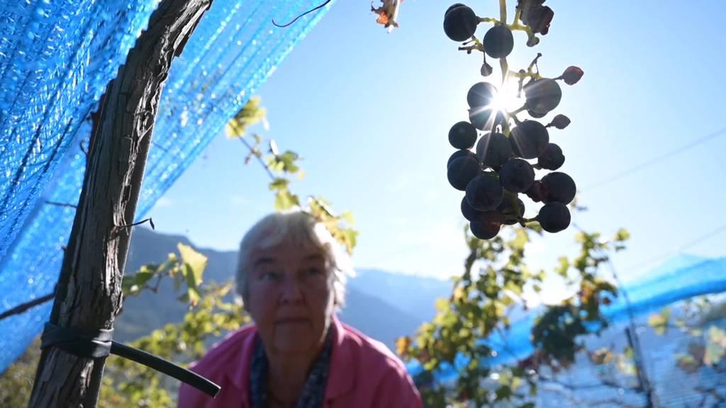 Winzer erwarten speziell guten Wein