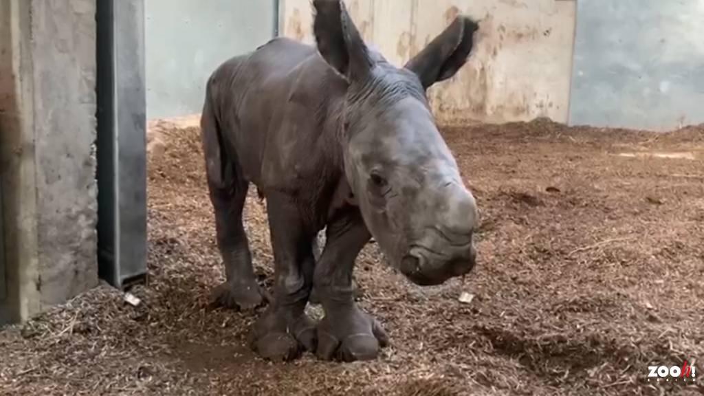 Jöö – Der Zoo Zürich hat einen neuen Publikumsliebling