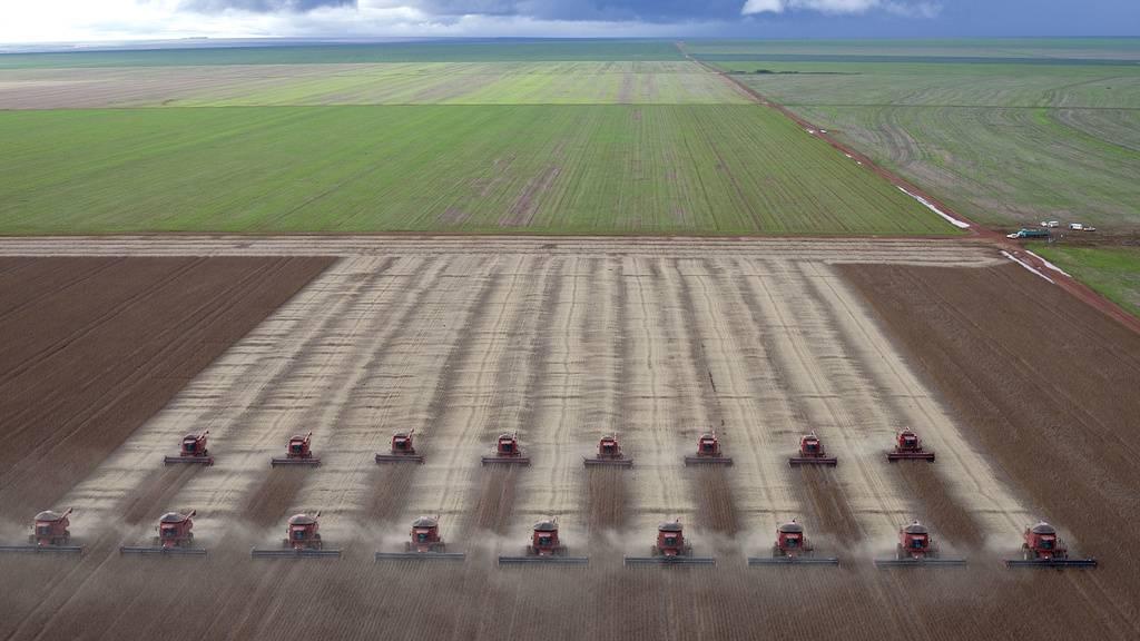 Weltweiter Soja-Anbau nimmt stark zu