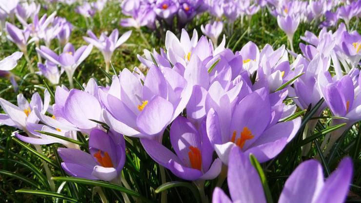 Steigt das Stickstoffangebot, wird die Vielfalt an Pflanzen von wenigen, durchsetzungsfähigen Spezien verdrängt.